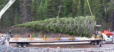 White House tree, starts j.KPAX