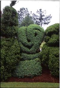 Curley bush