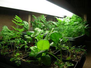 Basement garden #2