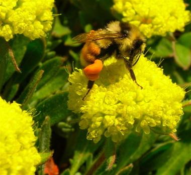 Bee_on_y_2