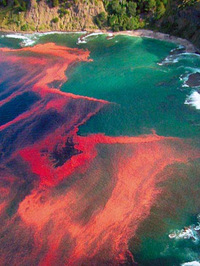 Red_tide_new_zealand_2