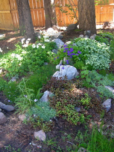 Rock_garden_in_june_3